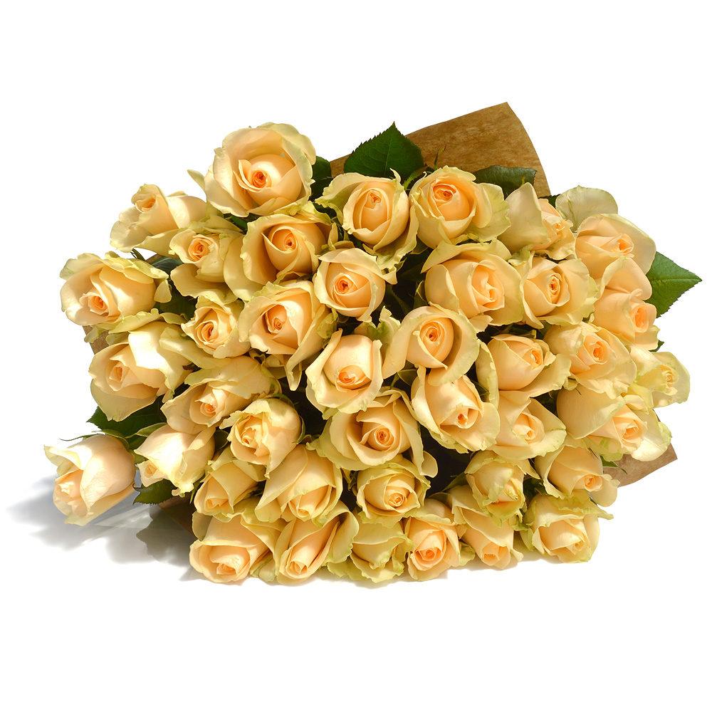 Creamy Dreamy Roses