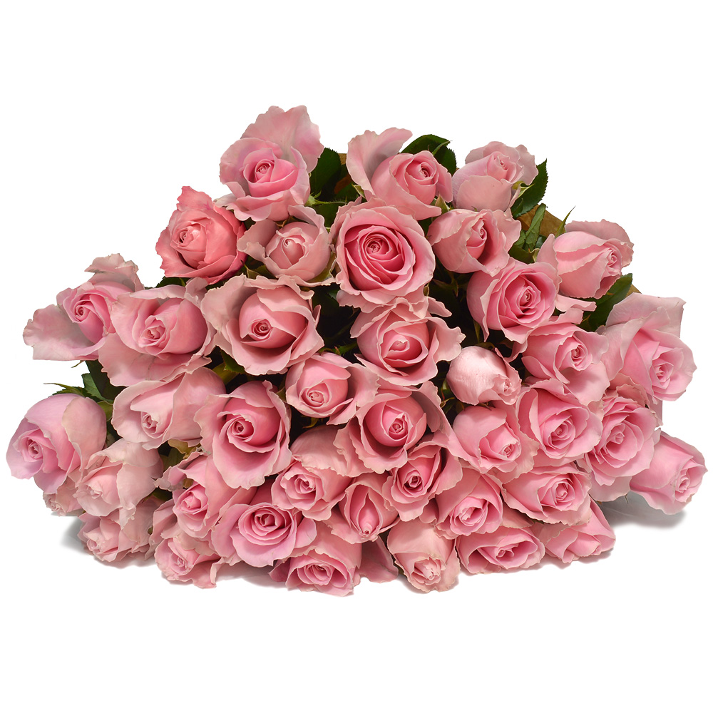 Charming Soft Pink Roses Flowers For Everyone