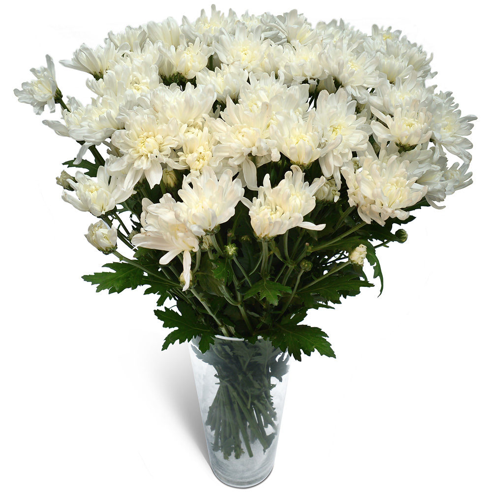 White Crysanthemums