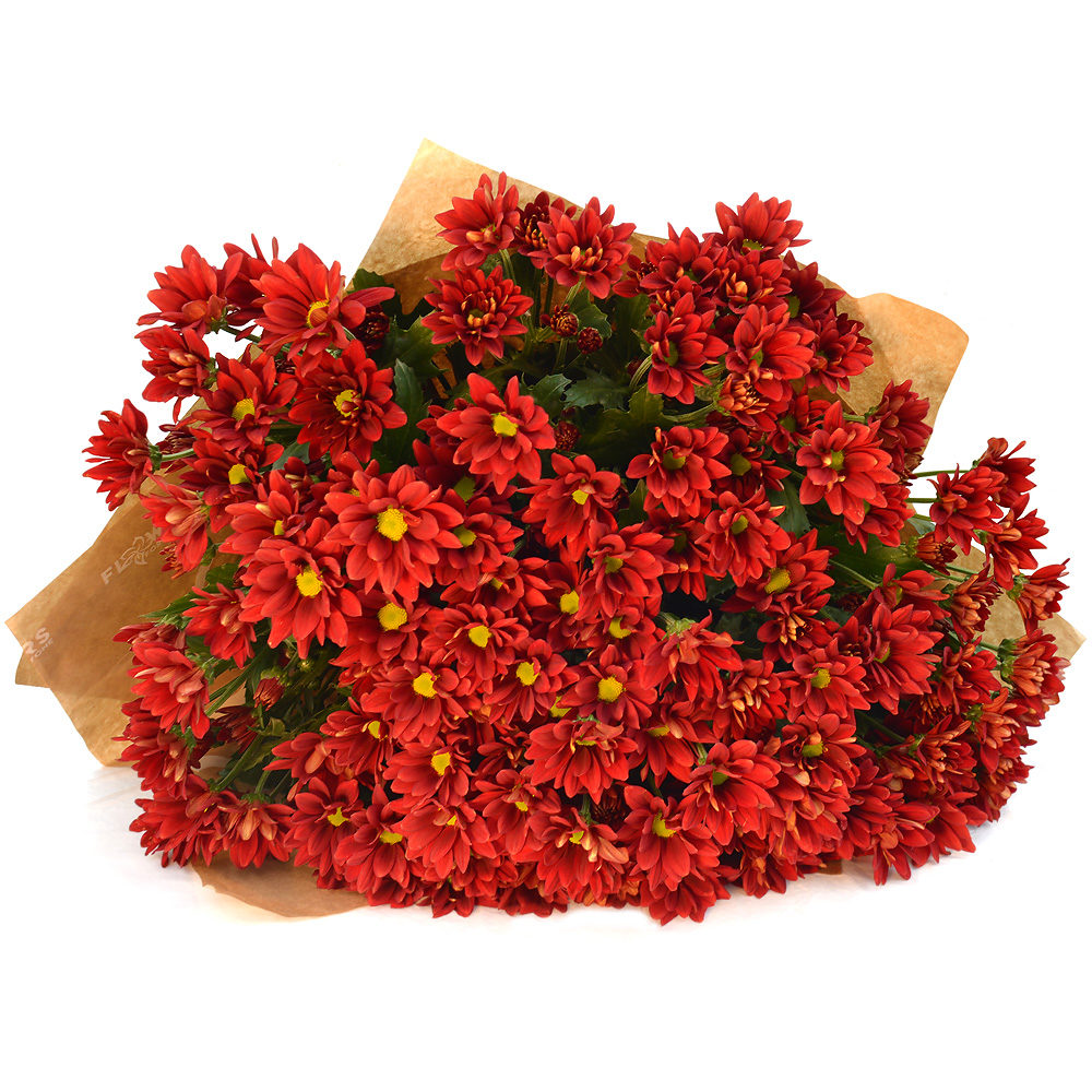 Red Crysanthemums