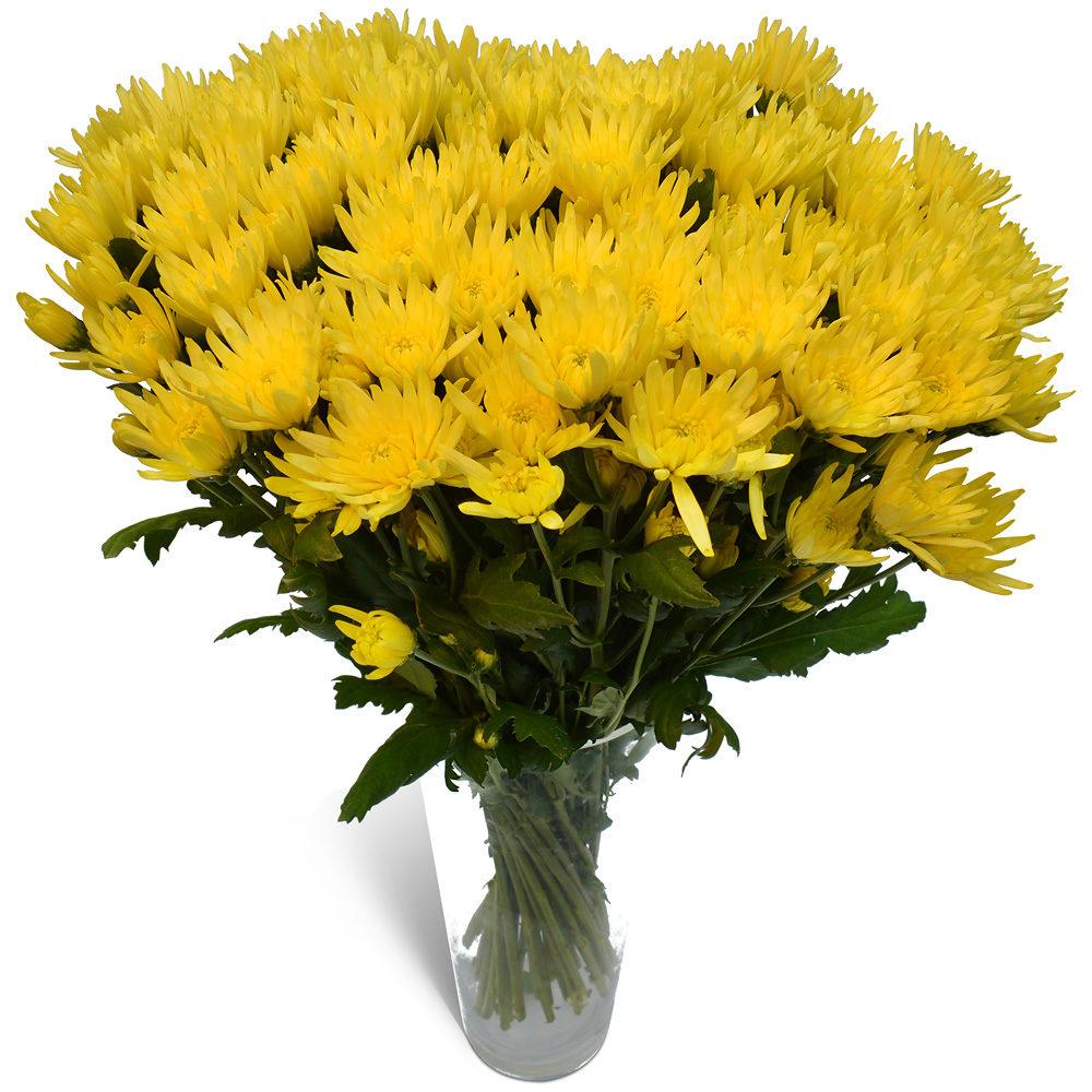 Yellow Crysanthemums